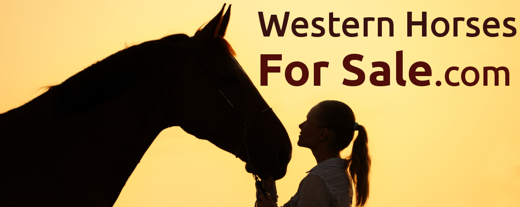 Western horses for sale